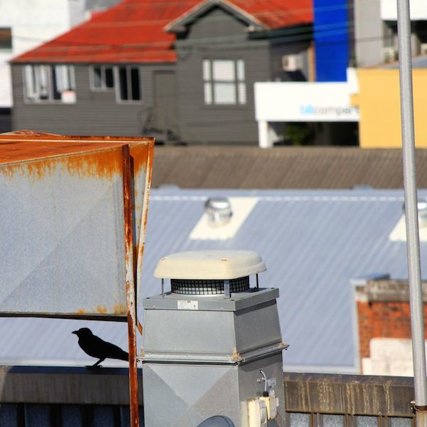 Crow on the rooftops, Fortitude Valley, Brisbane