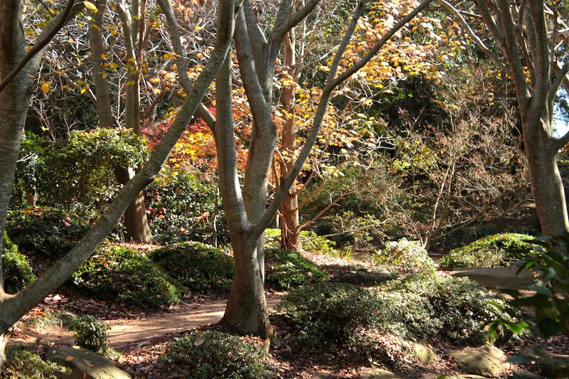 Japanese garden, University of Southern Queensland, Toowoomba