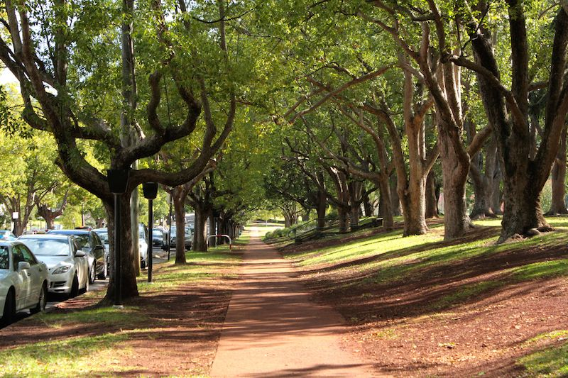 Tree-lined path, Queens Park, Toowoomba, Queensland