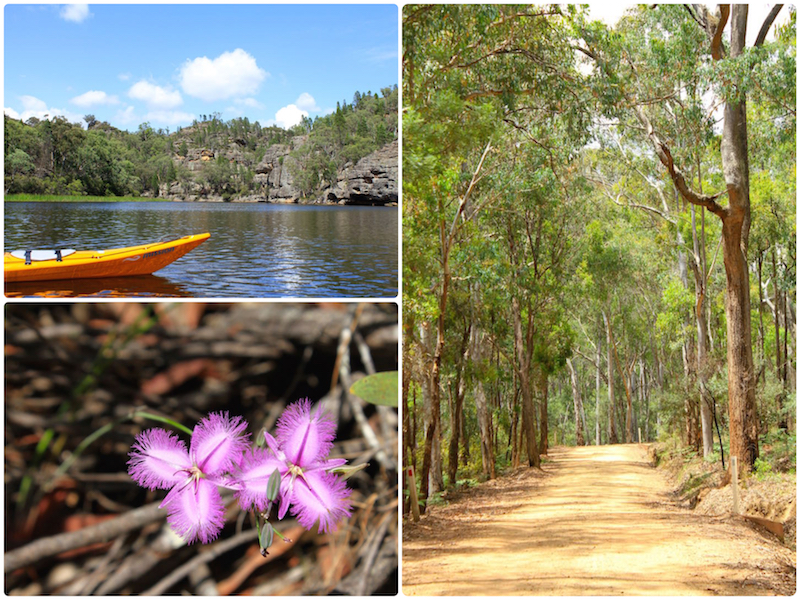 Cudgegong River, Native Orchid and Wollemi National Park, NSW