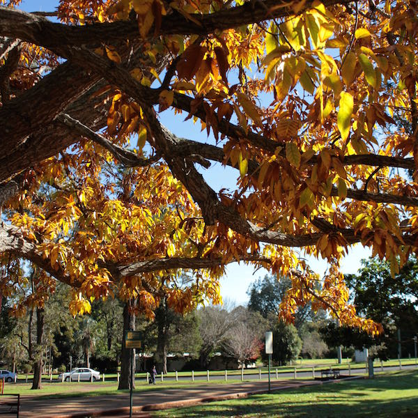 June 2014 - Queen's Park, Toowoomba