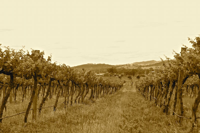 Thistle Hill organic vineyard, Mudgee NSW