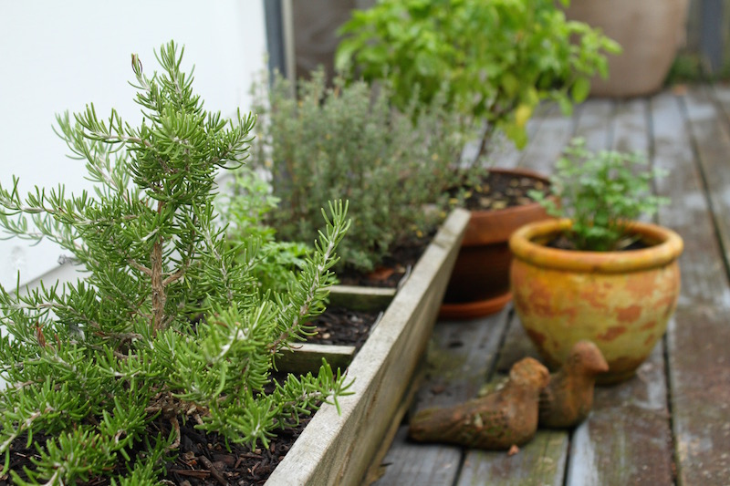 Urban herb garden in Auckland, New Zealand