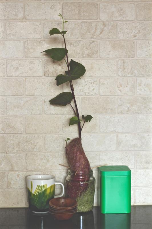 Marimekko mug, T2 tin, kumara plant and 70s little dishes