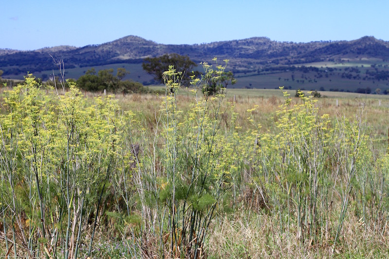 South of Scone, New South Wales
