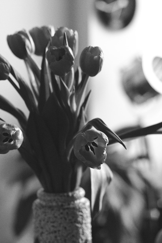 Tulips - Monochrome