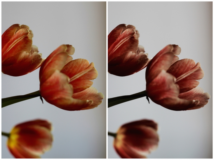Fresh flowers for a weekend at home - bright orange spring tulips