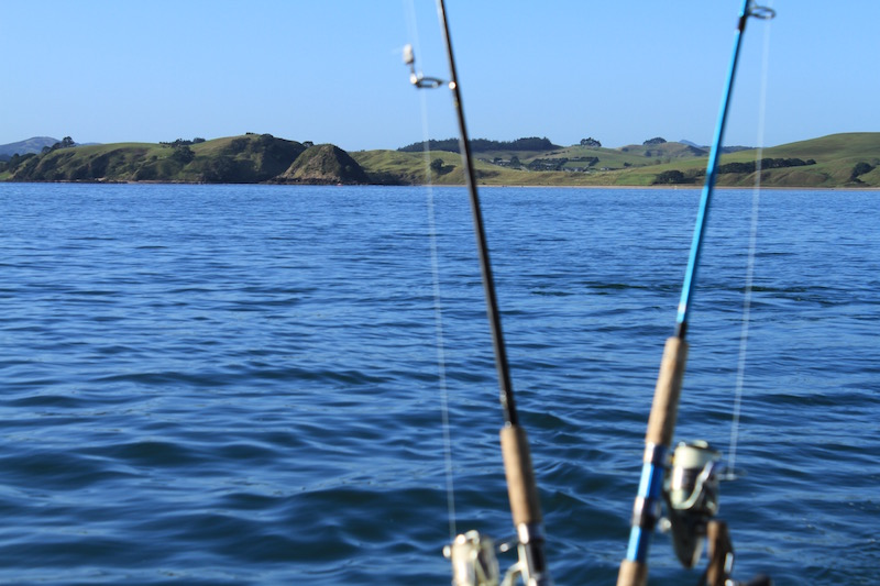Fishing in the pristine waters of New Zealand