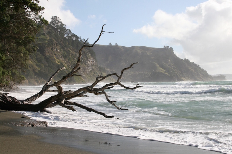 Goat Island Beach, Matakana Coast, winter 2009