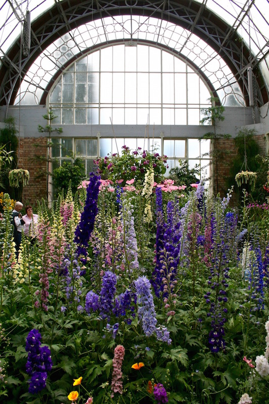 Lupins at the Wintergarden, Auckland 2010