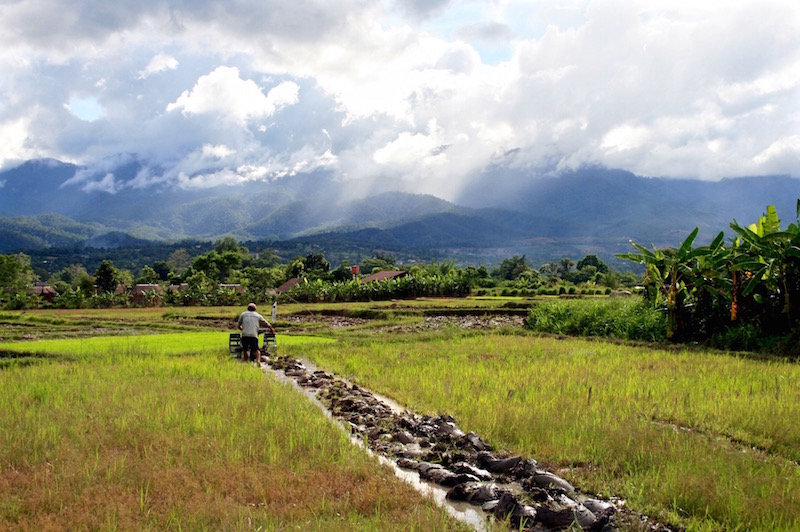 Rice fields in Pai, northern Thailand, 2011