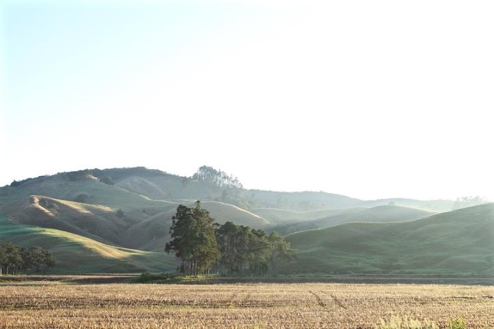 Rural far north New Zealand, 2014