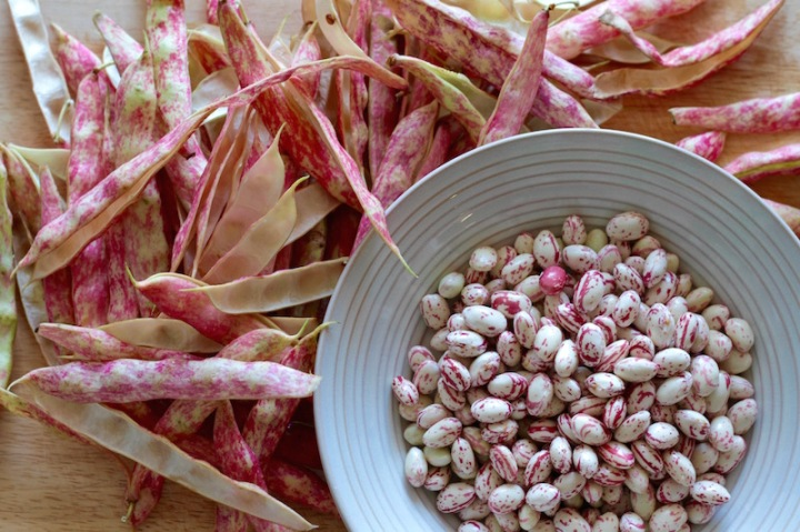 Fresh borlotti beans from the market, March 2016
