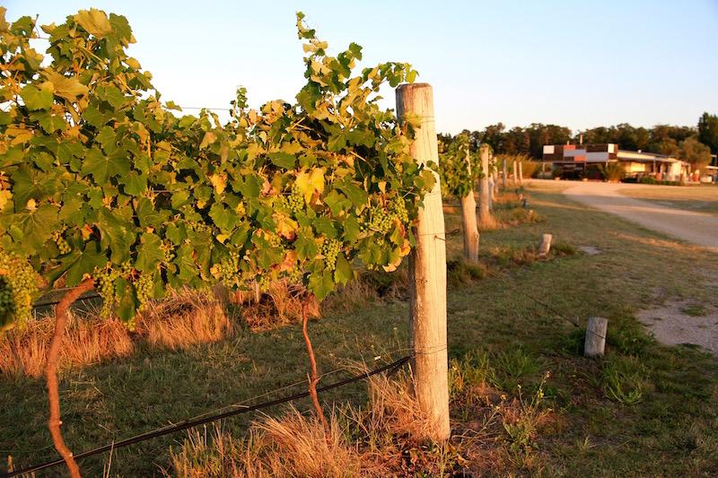 At Ridgemill Estate Winery, Stanthorpe, Queensland Australia
