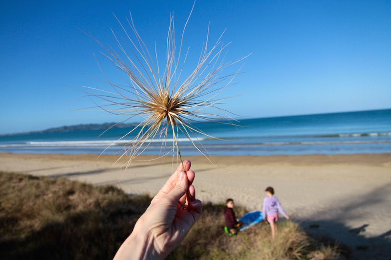 At Tokerau Beach, Karirkari Peninsula, Doubtless Bay New Zealand