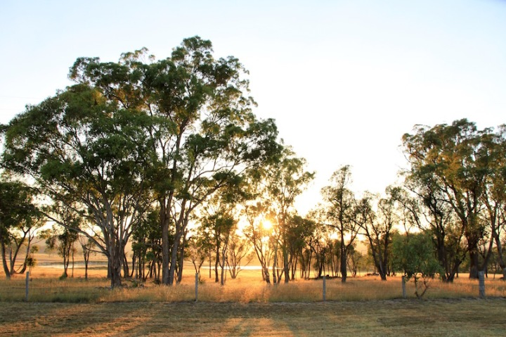 At dawn, Stanthorpe, Southern Queensland, Australia