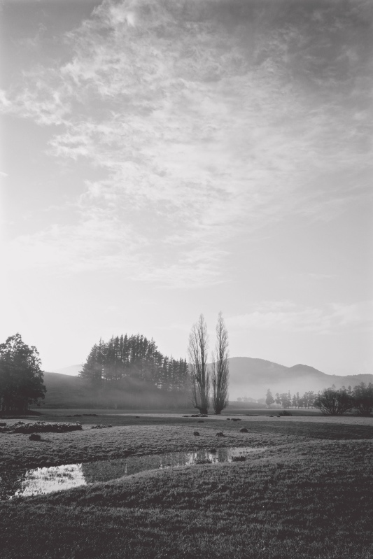 Misty morning in monochrome, Far North New Zealand