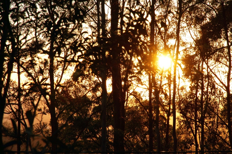 Sunrise through the bush, near Enoggera, Brisbane