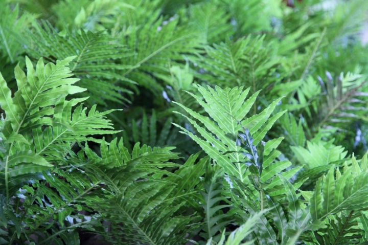 Cool green ferns, Roma St Parklands, Brisbane