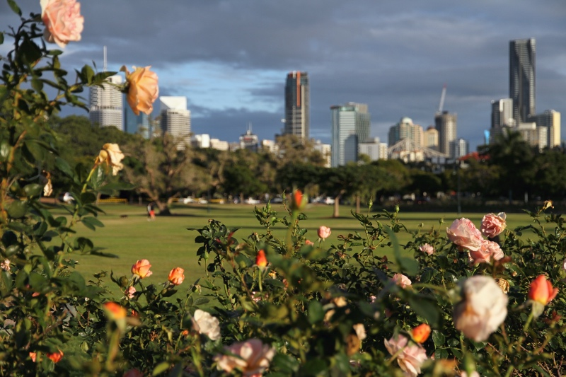 Rose garden in New Farm Park, Brisbane